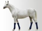 Chladící bandáž na nohy Aqua CoolKeeper pro koně
