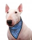 Chladící šátek Aqua CoolKeeper pro pejsky Blue Western