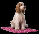 Chladící podložka pro psa Aqua CoolKeeper Roses