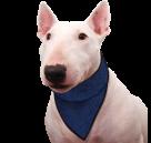 Chladící šátek Aqua CoolKeeper pro pejsky Pacific blue